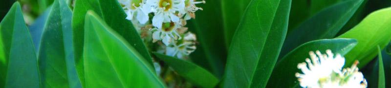 Planten kruisen - hoe en waarom